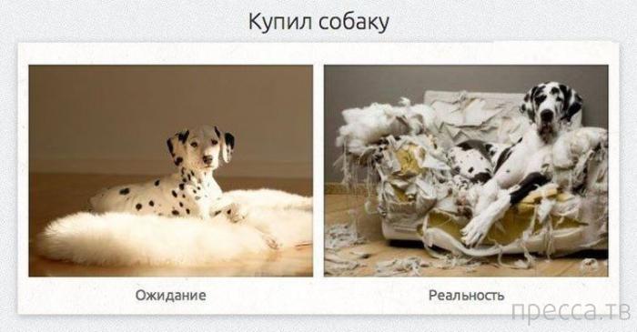 Прикольные картинки из серии: ожидания и реальность (28 фото)