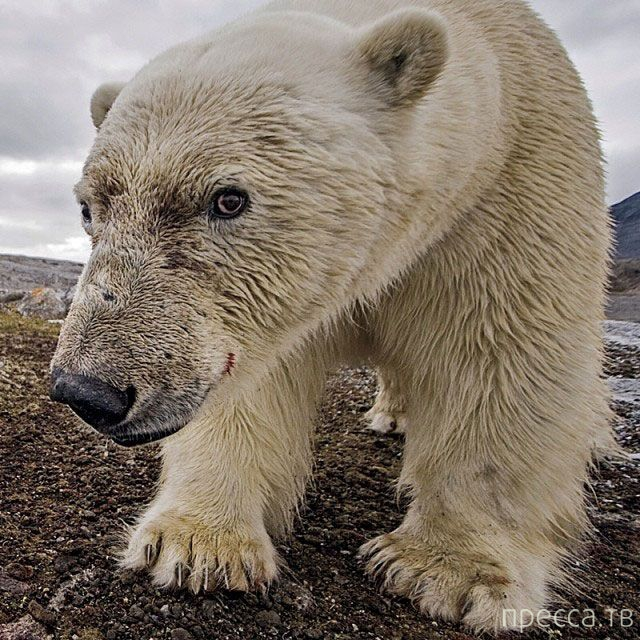 Лучшие фотографии от National Geographic в Instagram (39 фото)