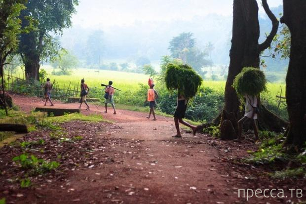 Сельская Индия (19 фото)