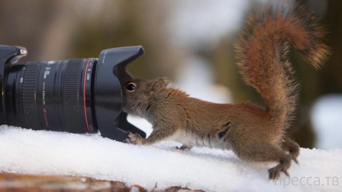 Прикольные белки и синицы от фотографа Andre Villeneuve (10 фото)