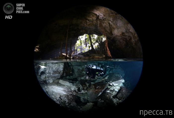 Лучшие подводные фотографии (24 фото)