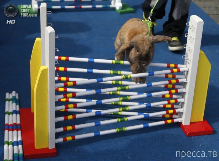 Кроличьи соревнования во время пасхальной ярмарки на Староместской площади в Праге (5 фото)