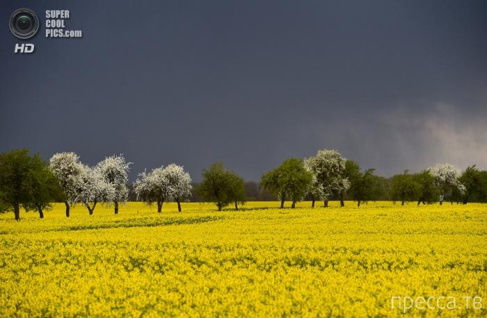 Самые красивые весенние пейзажи (25 фото)