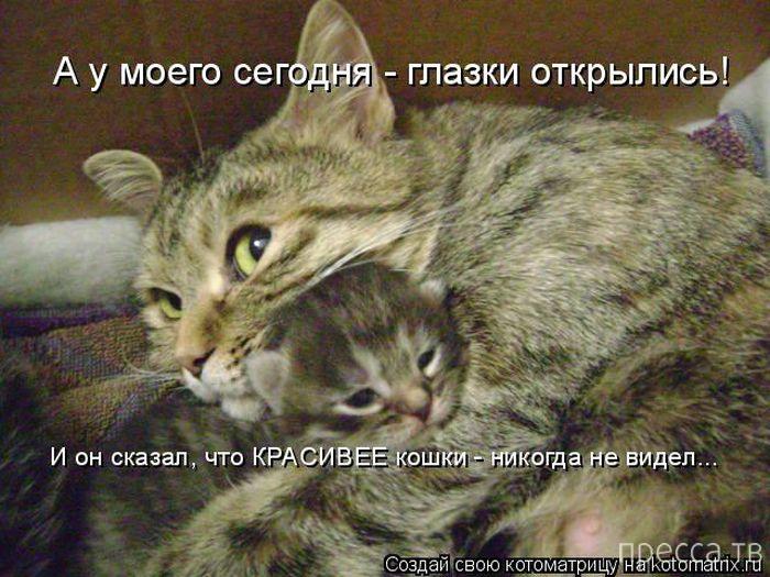 Лучшие котоматрицы недели, часть 5 (51 фото)