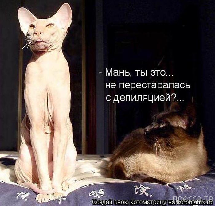 Лучшие котоматрицы недели, часть 6 (50 фото)