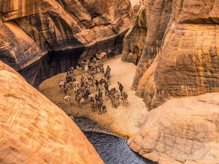Красивейший оазис в пустыне на северо-востоке Чада (12 фото)