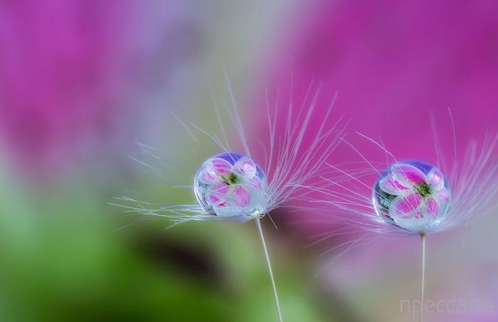Подборка невероятных и  очень красивых макрофотографий от японского фотографа Мики Асаи (Miki Asai) (16 фото)