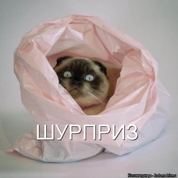 Лучшие котоматрицы за неделю (50 фото)