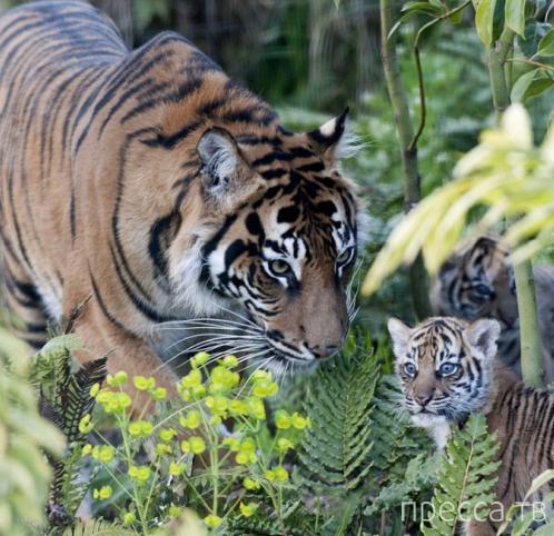 Трогательные фотографии с животными на тему материнской любви и заботы (8 фото)