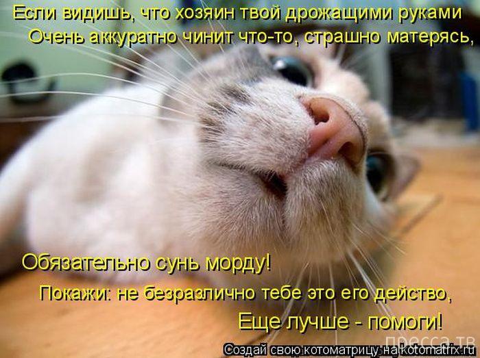 Лучшие котоматрицы за неделю, часть 2 (50 фото)