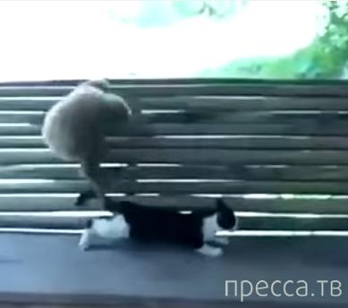 Макака дразнит котёнка...