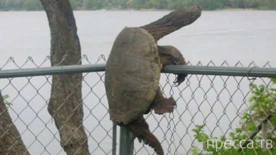 Прикольные животные, попавшие в неудобное положение (28 фото)