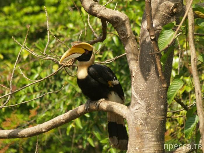 Парковый комплекс Кхауяй - красивейший парк Таиланда (11 фото)