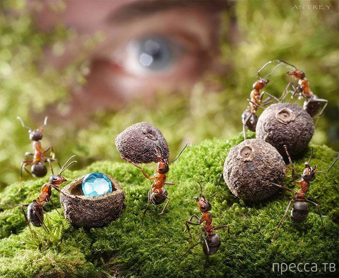 Картины нескучной муравьиной жизни от Андрея Павлова (20 фото)