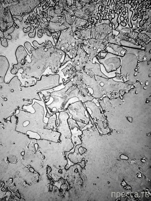 Слезы под микроскопом (7 фото)