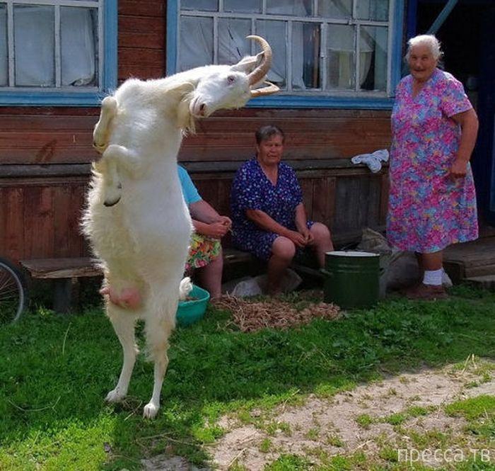 Прикольные фотографии из серии: Тем временем в России, часть 3 (21 фото)