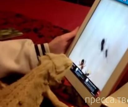 Животные играют на планшете
