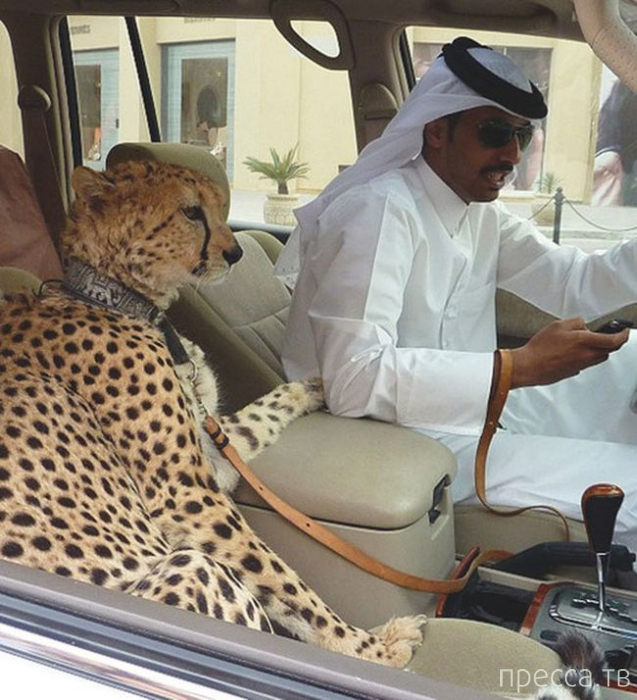 Повседневная жизнь Дубая глазами иностранца (16 фото)