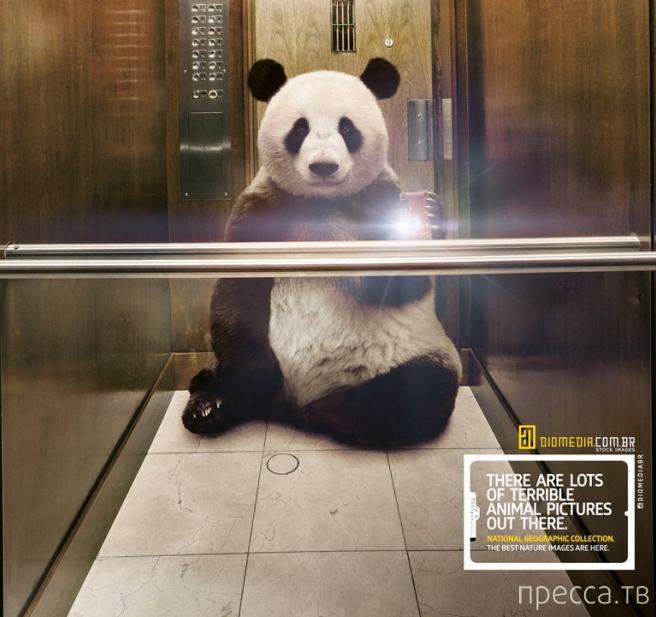 Селфи или самострелы диких животных в креативной рекламе от National Geographic (6 фото)