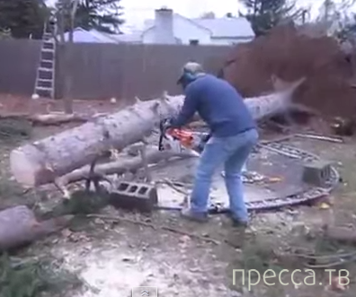 Отпилил немного дерева - верни всё на место!