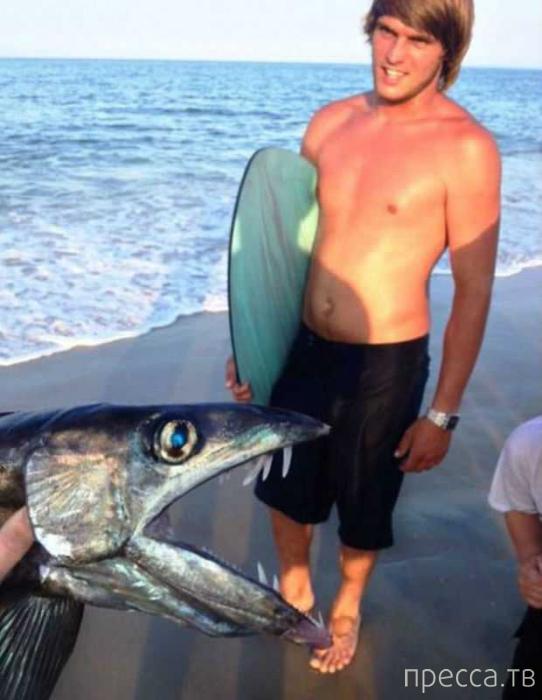 На пляж Северной Каролины выбросило чудовище (4 фото)