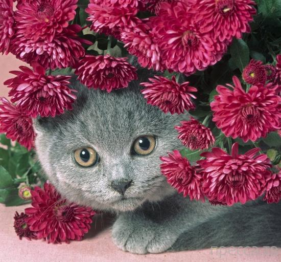 Почему у кошек 9 жизней (10 фото)