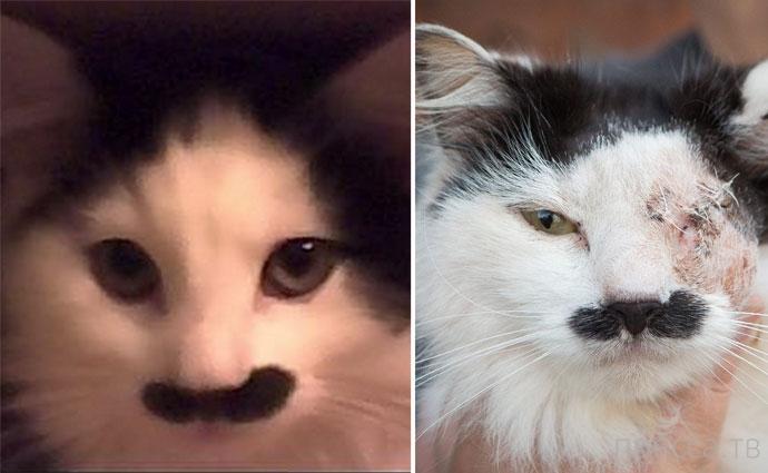 Кота изуродовали за то, что он похож на Гитлера (4 фото)
