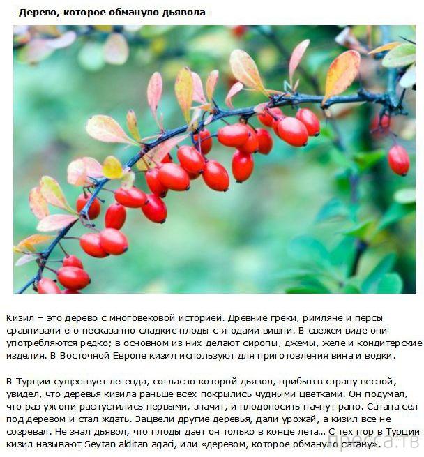 Интересные факты о фруктах (10 фото)