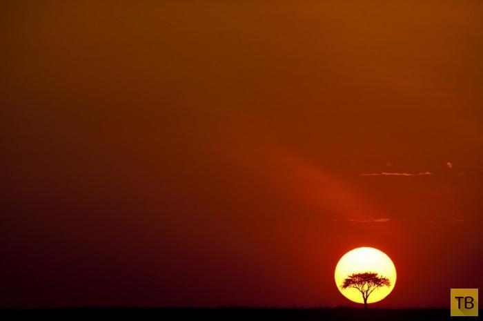 Красивые фотографии африканского заката от Пола Гольдштейна (15 фото)