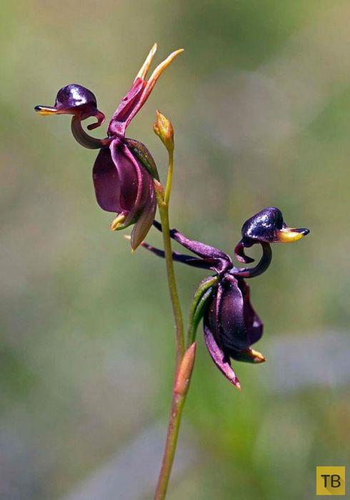 Самые невероятные, фантастические цветы (35 фото)