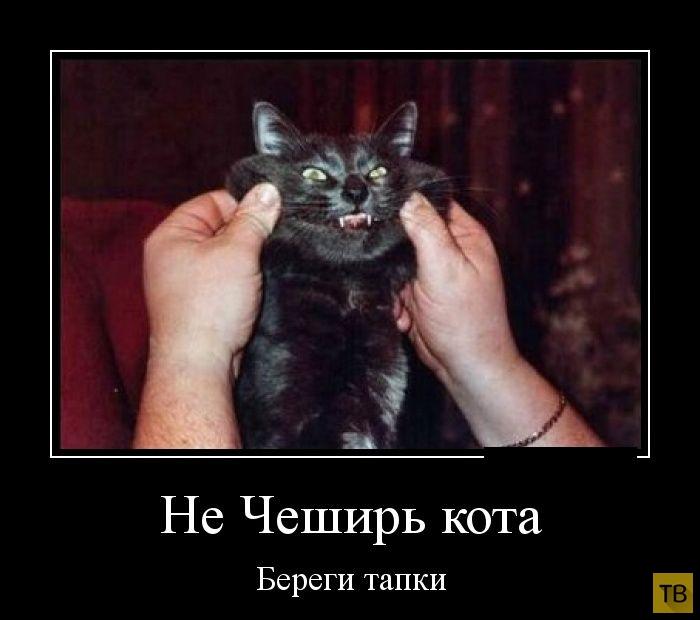 злые коты демотиватор собак называется болезнь