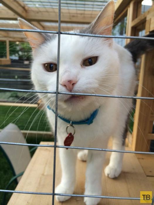 Пенсионер сделал вольер для любимых кошек (8 фото)