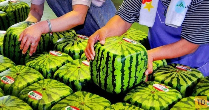 Топ 10: Самые дорогие продукты питания в Японии (11 фото)