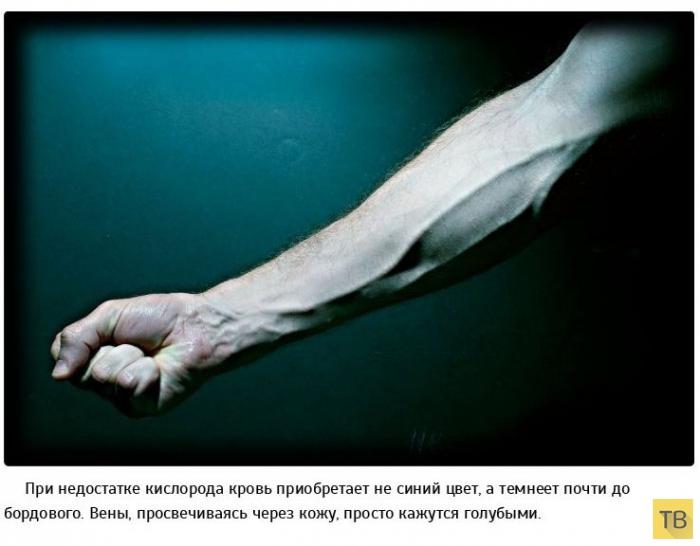 Опровержение научных фактов (35 фото)