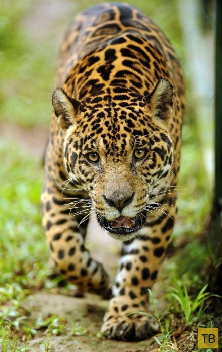 Лучшие фотографии животных за неделю (27 фото)