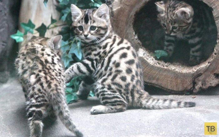 Лучшие фотографии животных с разных концов света (15 фото)