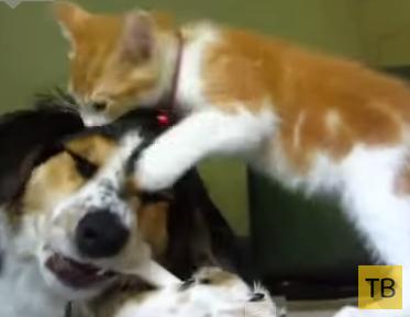 Подборка приколов с животными