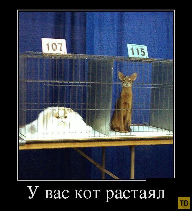 Самые злобные демотиваторы, часть 189 (30 фото)