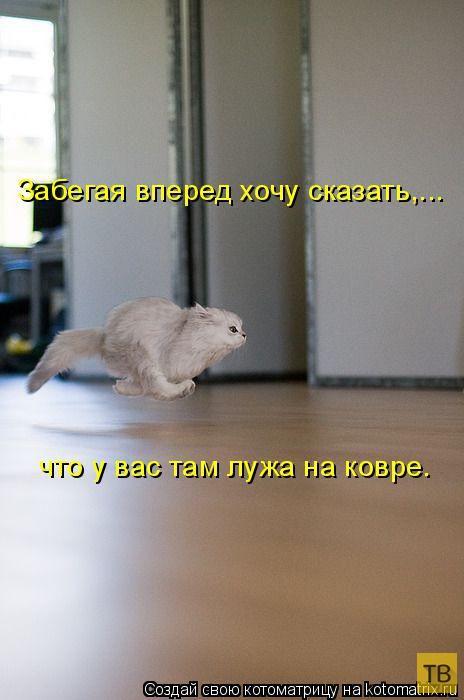 Лучшие котоматрицы недели, часть 8 (50 фото)