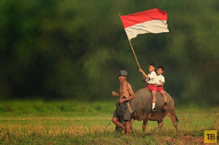 Будни сельских жителей Индонезии в ярких фотографиях Германа Дамара (20 фото)
