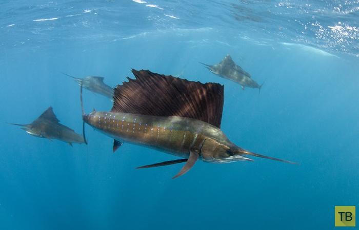 Подводный мир Энди Лернера (15 фото)