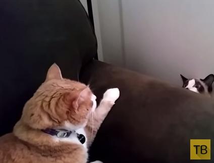 Коту явно дали понять, кто в кресле хозяин