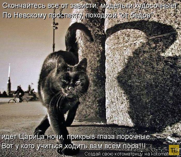 Лучшие котоматрицы недели, часть 9 (50 фото)