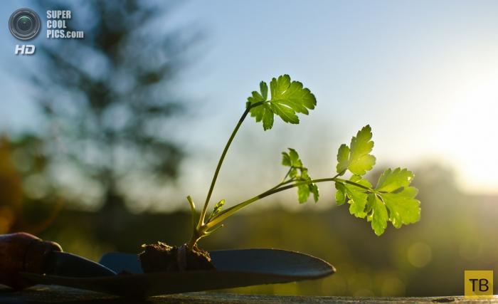 Полезная зелень (8 фото)
