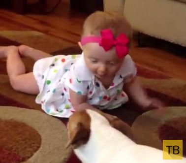 Пёс учит малышку ползать...