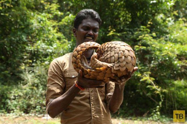 Смелый эксперт по змеям (19 фото)
