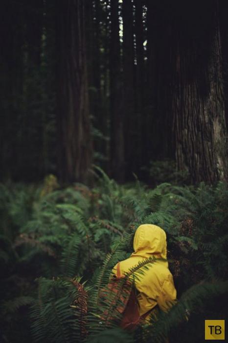 Фотографии бодрящего экстрима (36 фото)