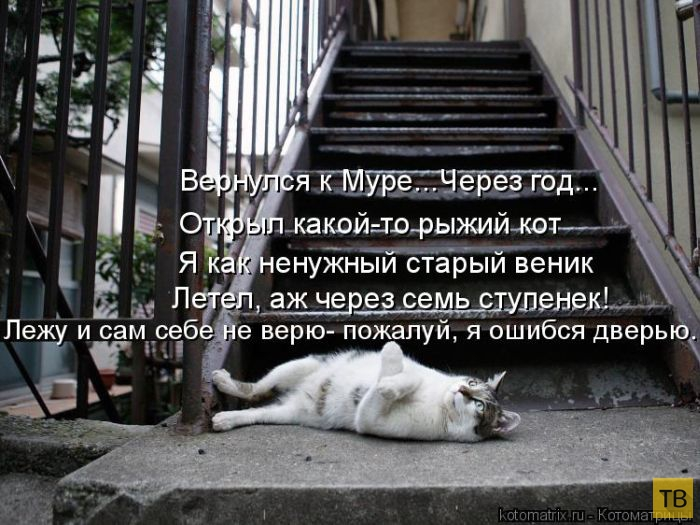 Лучшие котоматрицы недели, часть 10 (50 фото)