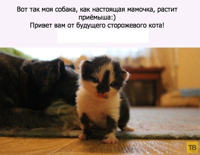 Как котенок нашел необычную маму (10 фото)