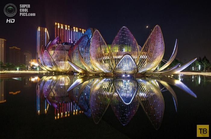 Лотос Чанчжоу (11 фото)